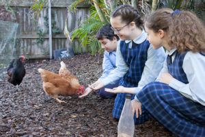 St Agnes Catholic Primary School Matraville students in chicken club